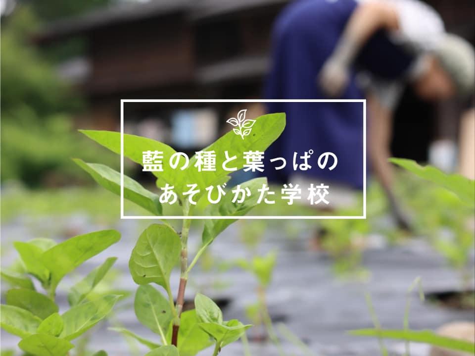 藍の種と葉っぱのあそびかた学校のアイキャッチ画像
